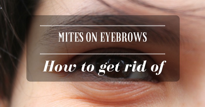 How to Get Rid of Mites on Eyebrows