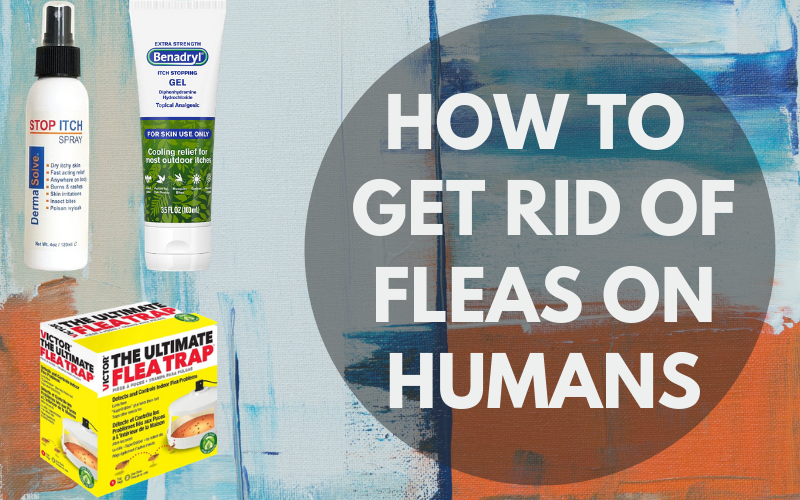 How To Get Rid Of Fleas On Humans [Brief Review]
