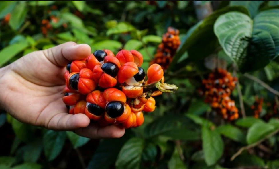 Here's What Industry Insiders Say About Benefits Of Guarana.